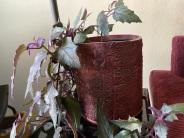 My plant in my Handbuilt pot.